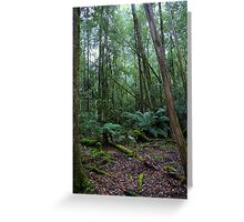 A glimmer of sun in the rainforest Greeting Card