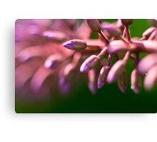 Purple and pink buddleia buds macro Canvas Print