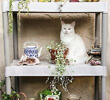 Maya On The Shelf by heatherfriedman