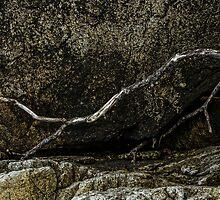 ROCK & WOOD by Sandy Stewart