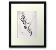 Olive branch Framed Print