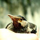 Bird Seated On Palm by AbhishekAnand