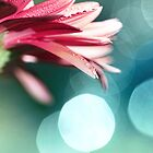 Nature's Dreaming by micklyn
