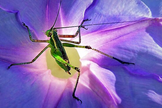 Katydid~~Or Didn't by paintingsheep