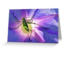 Katydid~~Or Didn't Greeting Card