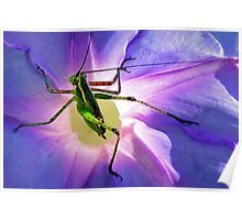 Katydid~~Or Didn't Poster