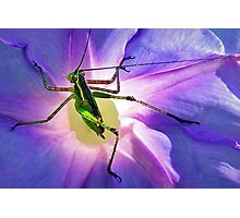 Katydid~~Or Didn't Photographic Print