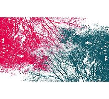 Abstract interwoven tree branches (pink and green) Photographic Print