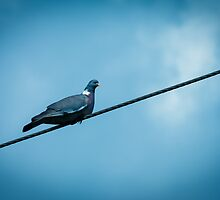 Bird on a wire by Ralph Goldsmith