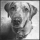 RIDGEBACK DOG by CRYROLFE