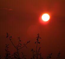 An Orange Flare by Hannah Saveall