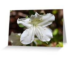 Flower0 Greeting Card