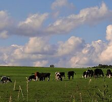 Happy Cows are in PA too! by vigor
