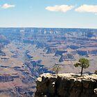 Canyon Ravine by Elizabeth Aubuchon
