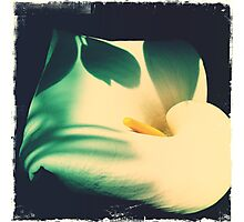 White Anthurium Photographic Print