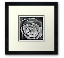 Cactus in Black & White Framed Print