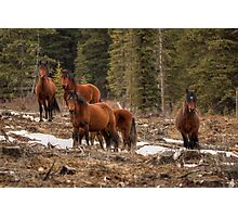 Curious Horses Photographic Print