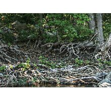 Finding Your Roots Photographic Print