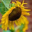 Sun for the Sun by Cynthia Broomfield