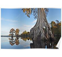 Dismal swamp grouping Poster
