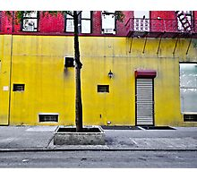 A Tree grows in  . . . Manhattan? Photographic Print