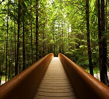 Redwood Bridge by Chad Dutson