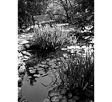 pond solace Photographic Print
