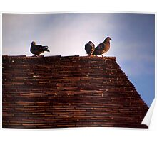 Birds on a Roof Poster