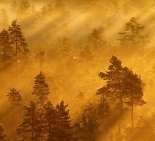 27.8.2013: Sunrise in Torronsuo National Park I by Petri Volanen