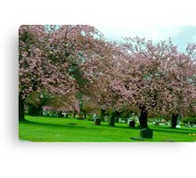 Resting Under the Cherry Blossoms... Canvas Print