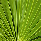 Palm Tree Leaf by Sharon Brown