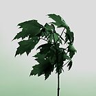 Birth of a Tree by Ben Yamamoto