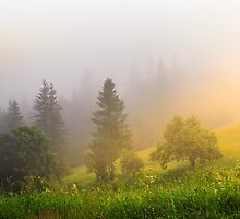 sun rays make way through fog by pellinni