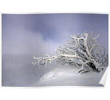 snow trees I Poster