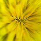 Bright yellow macro flower explosion by ruthjulia