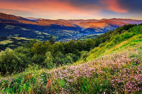 wild flowers in mountains by pellinni