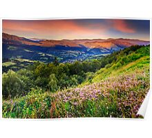 wild flowers in mountains Poster