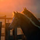 Sunset Fillies by Clare Colins