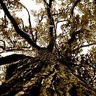 The Tree by Ben Yamamoto