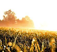 Stumble Through The Grass by Ben Yamamoto