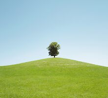 Lonely Linden Tree by visualspectrum