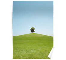 Lonely Linden Tree Poster