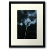 Dandelion, Diente de león Framed Print