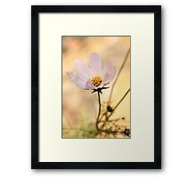 Rose flowers Framed Print