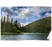 coniferous forest on the shore of a mountain lake Poster