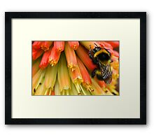 the colour of honey Framed Print