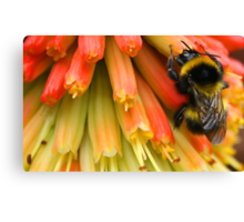 the colour of honey Canvas Print