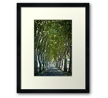 Tree Lined Road in Southern France Framed Print