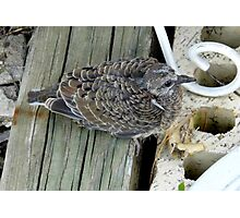 Our Baby Dove Photographic Print
