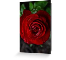 Red Rose - Paris Greeting Card